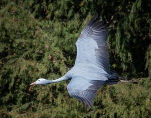 Crane 3