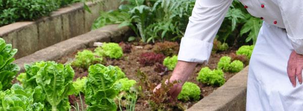 veggie-garden-cleopatra