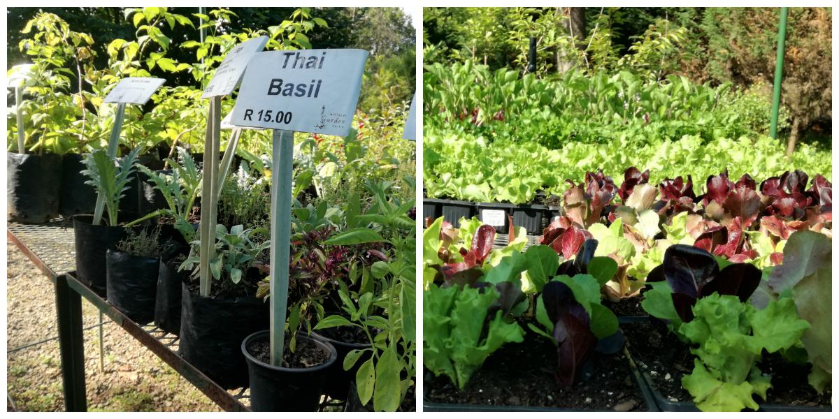 Midlands Garden Center Herbs