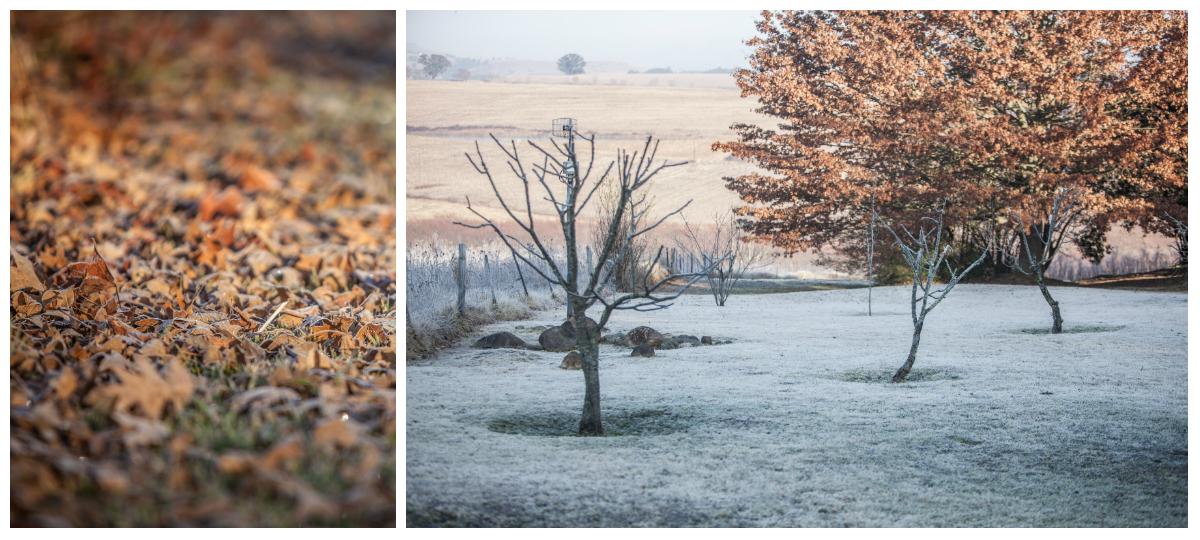 Frost Midlands Meander