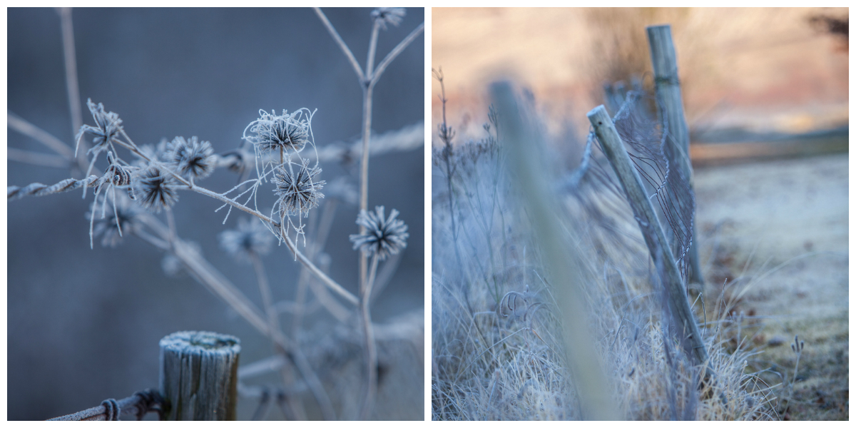 Frosty morning Midlands meander